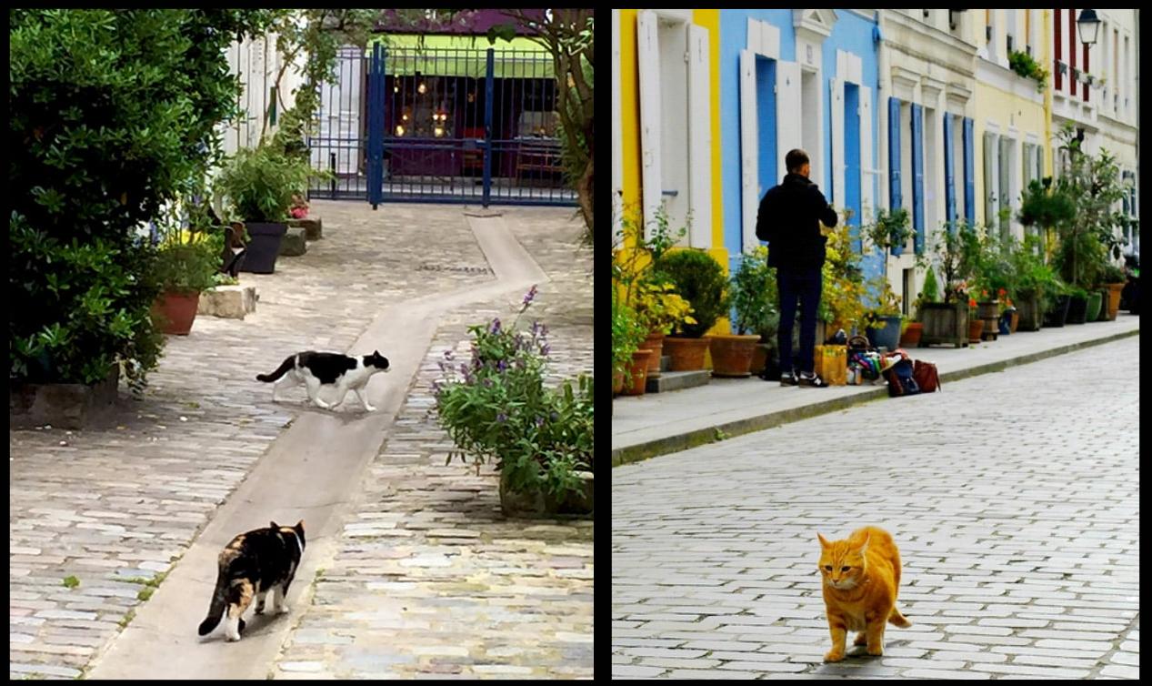 تصویر: جمعیت مدیریت شدهی گربهها در پاریس امروز